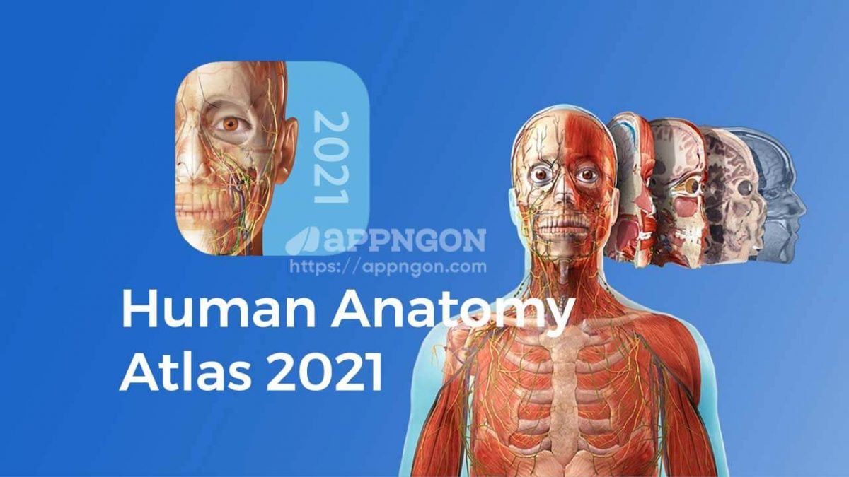 cover human anatomy atlas 2021